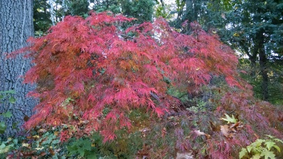 IMK Nov Fall Tree