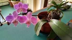 IMK Feb orchid
