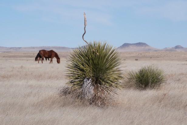 Enchilada Marfa landscape MS photo