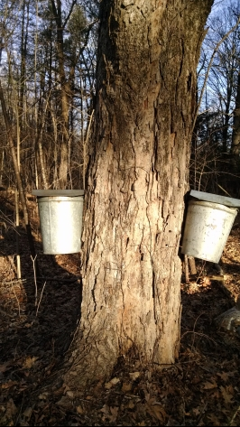 maple-buckets.jpg